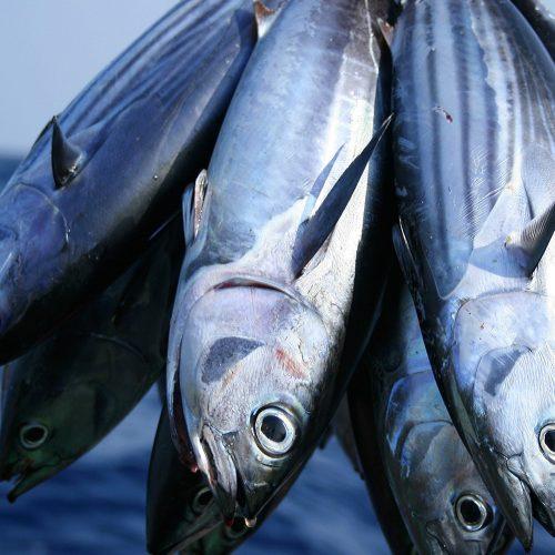 Bunch of Tuna